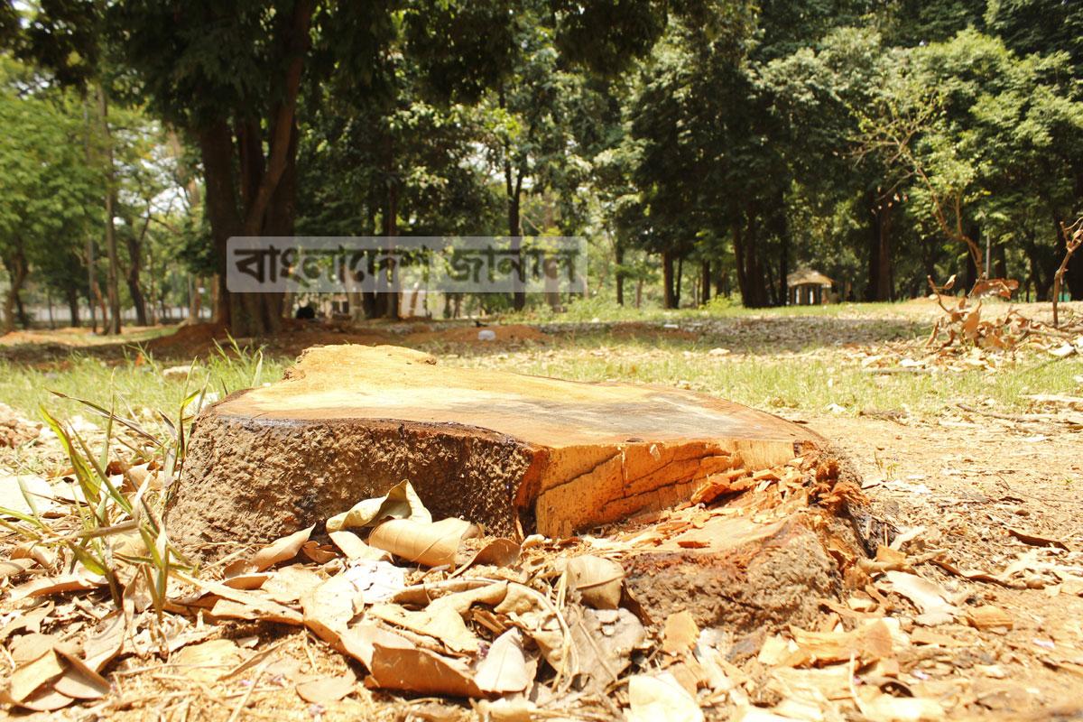 সোহরাওয়ার্দী উদ্যানে কাটা হচ্ছে গাছ, বানানো হচ্ছে রেস্টুরেন্ট। ছবিটি শনিবার তোলা। ছবি: ইলিয়াস সাজু